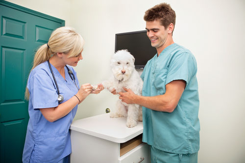Female Veterinarian With Assistant Examining Dog S Paw